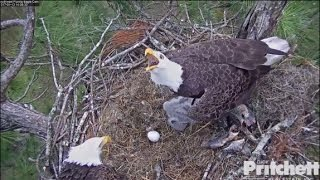 SWFL Eagles ~ Intruder Alert as M15 Delivers Another Fish to Nest 1.13.17