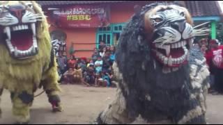 Heboh Atraksi Singo Barong Makan Anak Kecil Nyata