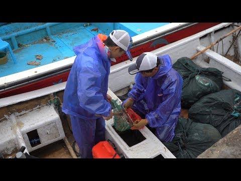 烽雄合伙开两条船抓虾,阿雄自己抓了几十斤虾,阿烽赚大便宜了