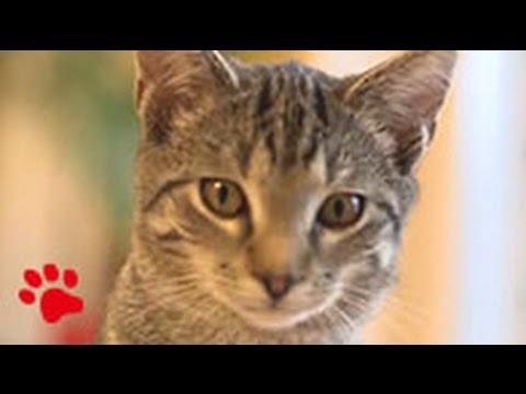 Folgt Felix: GPS-Tracking von Katzen und die erstaunlichen  Ergebnisse