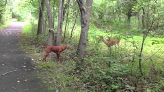 Dog Meets Deer