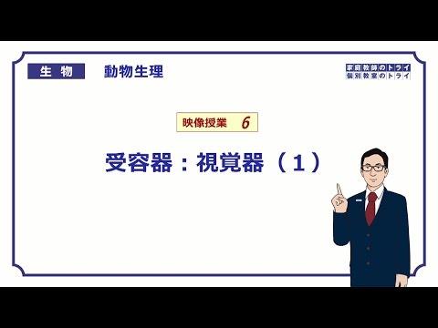 , title : '【高校生物】 動物生理6 受容器:視覚器(1)(24分)