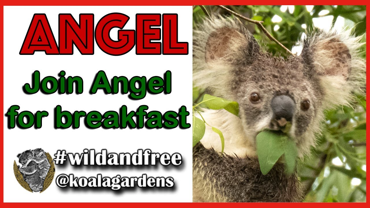 Join ANGEL for breakfast