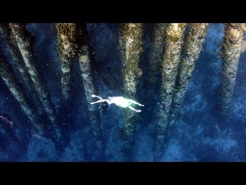 Underwater dance in Bonaire Island