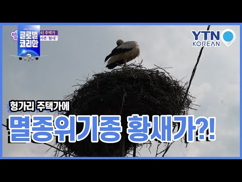 헝가리 주택가에 멸종 위기종 황새가?! / YTN KOREAN