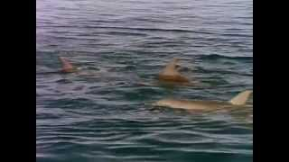Private Lives of Dolphins