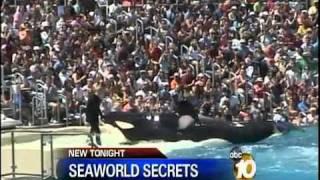 Death comes sudden!! SeaWorld Trainer Killed by Shamu - YAHSHUAsavesToHeaven