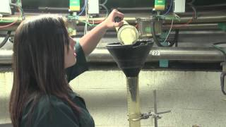 A Career in Dairy Farming - Management and Research  (JTJS92015)