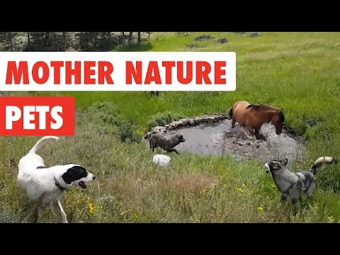 Mother Nature Pets   Funny Pet Video Compilation 2017
