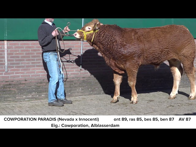 Limousin Cowporation Paradis NL681703076