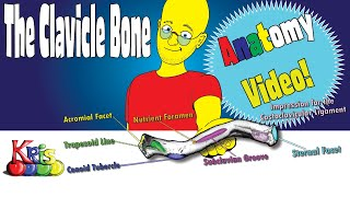 The Clavicle Bone → Anatomy and Bony landmarks video|| By: Kinesiology Kris