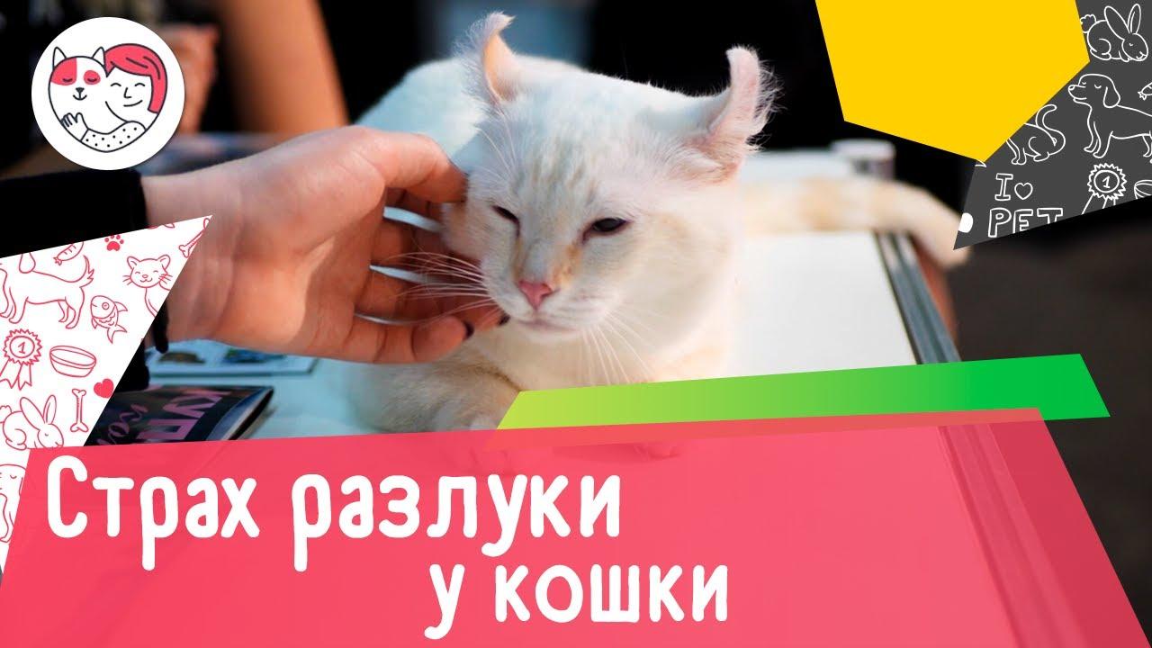 3 популярных вопроса о страхе разлуки у кошек