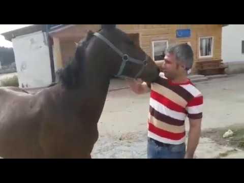 коня. ... Здесь находится знаменитый в свое время (и самый дорогой тогда) жеребец