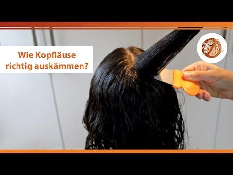 Läuse-auskämmen-Methode mit dem Läusekamm – kurze & lange Haare