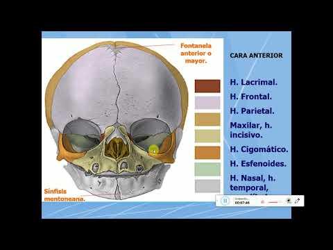 Cómo tratar osteocondrosis de los remedios populares de la columna vertebral dorsal cervical
