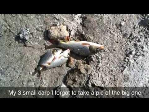 Private Pond Carp Fishing