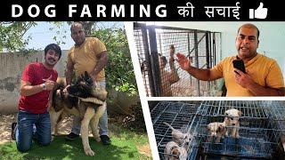 20 Years Experience in Dog Breeding Business | About Dog Kennel Business Setup|Dog Farming in India