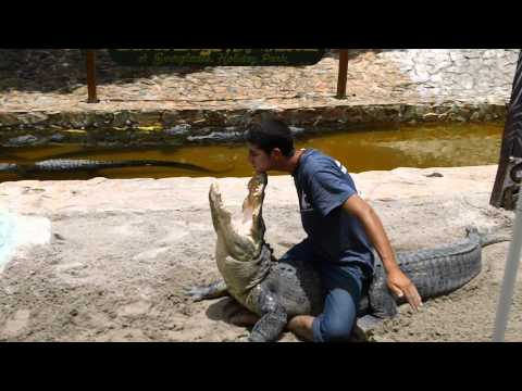 Alligator Wrangler