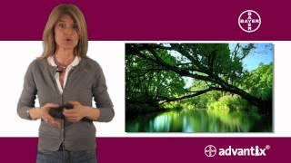 Recomendaciones sobre la aplicación de la pipeta antiparasitaria