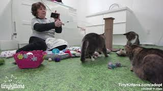 Harriet plays with Auntie Suzanne, and it is adorable!!
