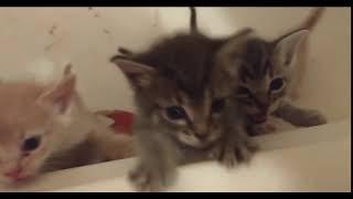 Потешный кот советуем взглянуть | Приколы до слез - Collab #160