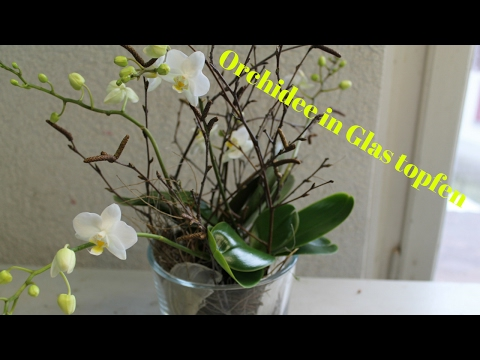 diy orchidee im glas simpel einfach eintopfen. Black Bedroom Furniture Sets. Home Design Ideas