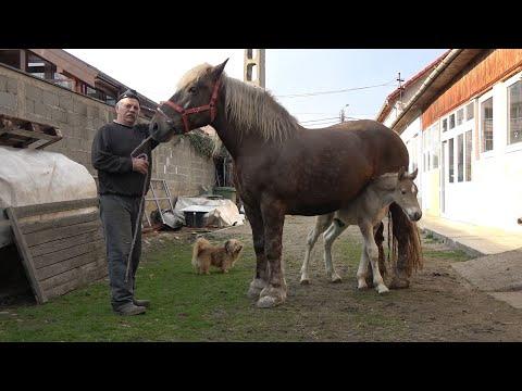 Tratamiento de papilomatosis canina