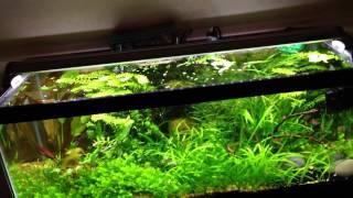 finnex planted led aquarium light most popular videos