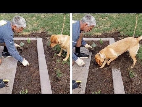 Ο σκύλος... κηπουρός