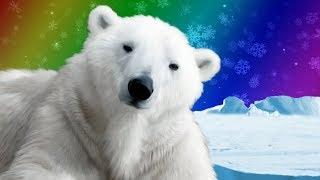 Polar Bears for Kids | Wild Animals | Arctic Animals