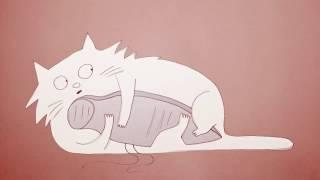 Смотреть онлайн Почему коты ведут себя странно