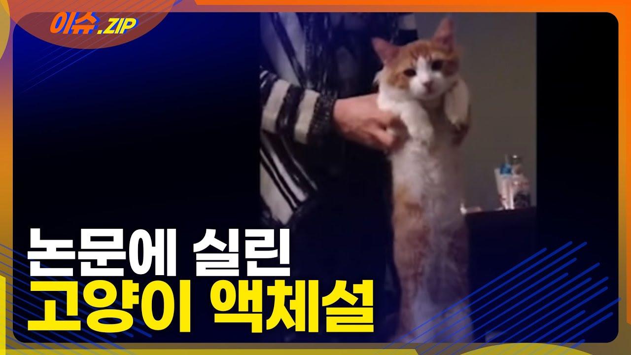 논문으로도 발표된 '고양이 액체설' 과연 진짜일까?