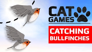CAT GAMES - 🐦 CATCHING BULLFINCHES (ENTERTAINMENT VIDEOS FOR CATS TO WATCH) 60FPS