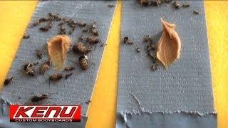 Kill da roach! Duct tape trap extermination.