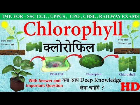 Chlorophyll in hindi | what is Chlorophyll (क्लोरोफिल) | Chlorophyll structure and function
