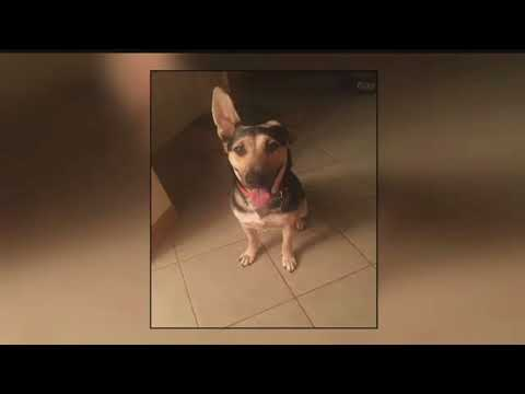 Missing Arizona dog found a year later in New York