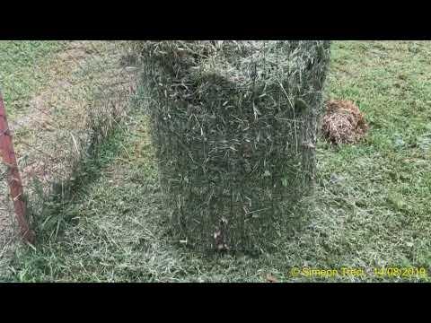 Kókusznövény parazitákból