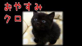【猫の泣ける話】悲しいエピソード [ おやすみ、クロ ]