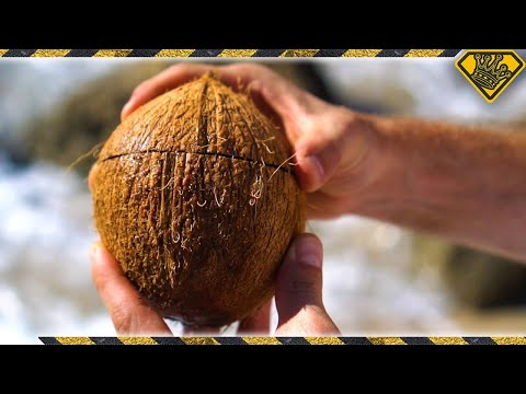 The Best Way To Split Open A Coconut Without Any Tools