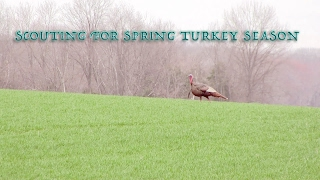 Scouting for Spring Turkey Season