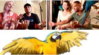 BirdTricks Helps Mia The Macaw || Parrot Training & Free Flight
