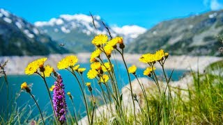 Morning Relaxing Music - Calm Piano Music, Study Music, Massage Music, Stress Relief (Walter)