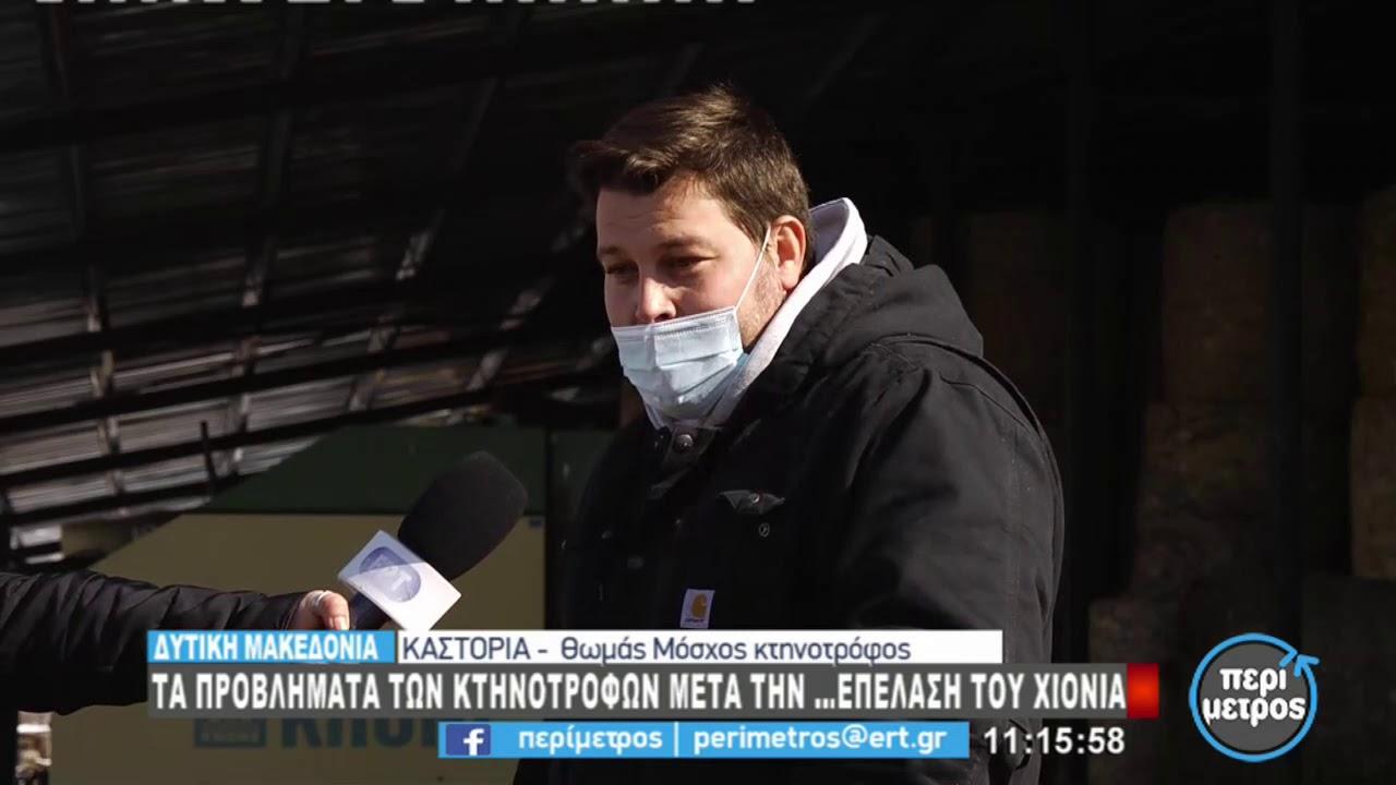 Τα προβλήματα των κτηνοτρόφων σε Καστοριά και Ελασσόνα με τον χιονιά | 17/2/2021 | ΕΡΤ