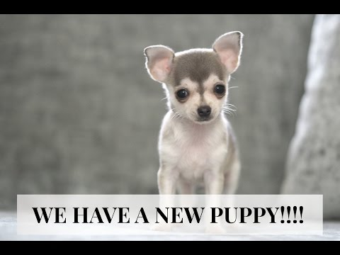 WE HAVE A NEW PUPPY!! | PLUS A MINI HAUL