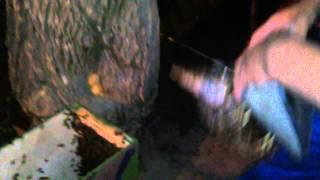 Заселение роя в колоду (часть 1)