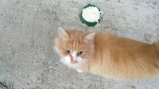 Кот говорит - нормально, люблю курицу!