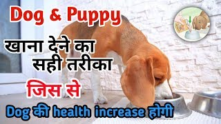 Right way to give food to dog / How to increase dog health / dog food timing