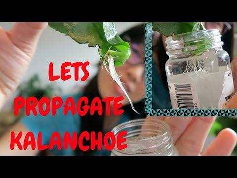 Condroitină cu glucozamină pentru comprimate articulare