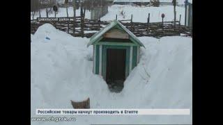 В Цивильском районе овчарки насмерть загрызли пенсионерку