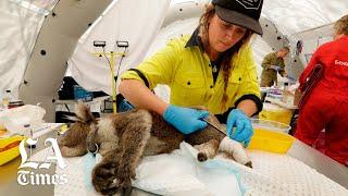 Thumbnail for Saving Koalas off Australia's southeast coast